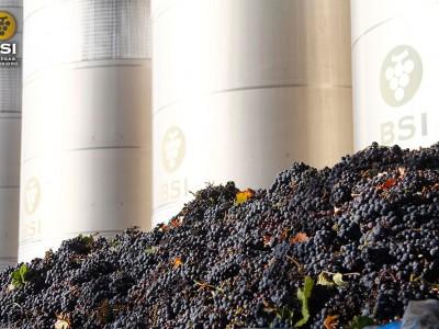 Descarga de uva monastrell