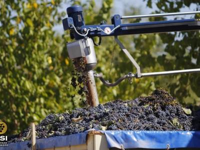 Obtención del grado de la uva
