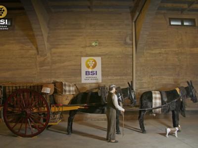 Carro tradicional tirado por dos mulas